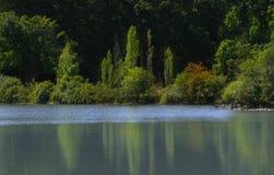 湖反映结构树 库存图片