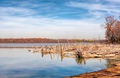 湖和下落的树 库存图片