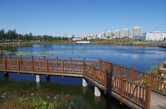 湖和大厦看法  免版税库存照片