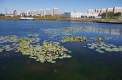 湖和大厦 库存图片