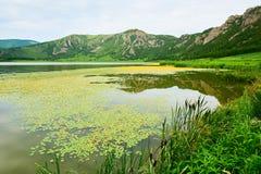 湖和山的浮萍属未成年人 免版税库存图片