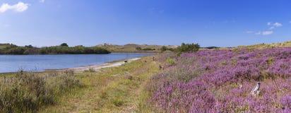湖和开花的石南花在荷兰 免版税库存图片