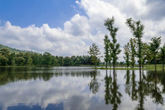 湖和松的云彩 库存照片