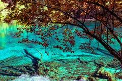 湖和树在九寨沟风景名胜区,四川,中国 免版税图库摄影
