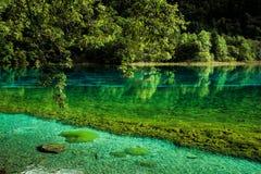 湖和树在九寨沟风景名胜区,四川,中国 免版税库存图片