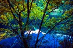 湖和树在九寨沟风景名胜区,四川,中国 免版税库存照片