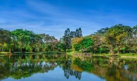 湖和树的反射 免版税库存照片