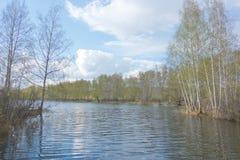 湖和桦树森林 免版税图库摄影