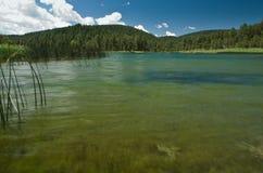 湖和森林 免版税库存图片
