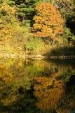湖和秋天森林 库存图片