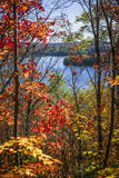 湖和秋天森林 免版税图库摄影