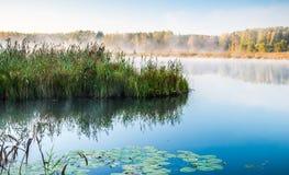 湖和芦苇 免版税图库摄影