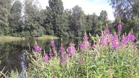 湖和花 免版税图库摄影