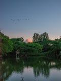 湖和鸟美好的风景在buriram,泰国 免版税库存图片