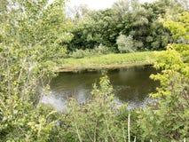 湖和结构树 横向 免版税图库摄影