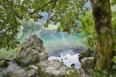 湖和结构树 免版税库存照片