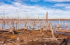 湖和死的树 库存照片