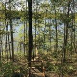 湖哈特威尔岸的森林 免版税库存图片