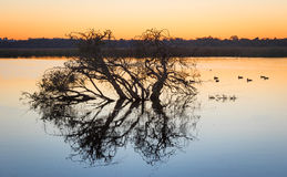 湖商人在黎明 库存照片