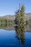 湖国家公园森林的黄石 库存图片
