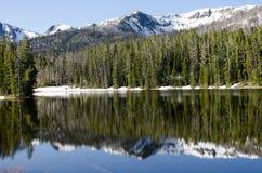 湖国家公园森林的黄石 免版税库存照片