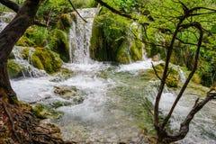湖国家公园plitvice瀑布 免版税图库摄影