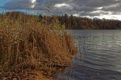 湖在与芦苇的多云天空下在前景在一个冬天 免版税库存图片