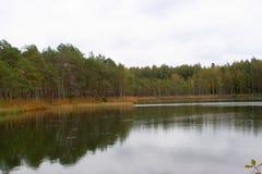 湖在俄国森林里 库存图片
