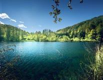 湖在克罗地亚的森林里 免版税库存照片