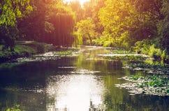 湖在公园在阳光下 库存图片