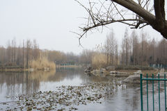 湖在冬天 免版税图库摄影