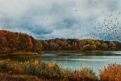 湖在利沃夫州地区 免版税库存照片