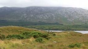 湖在国家公园Connemara 股票视频