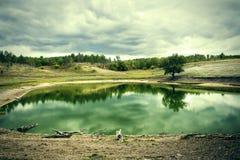 湖在多云天气的一个杉木森林里 库存图片