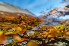 湖在巴塔哥尼亚的国家公园Los Glaciares秋天,阿根廷边 免版税库存照片