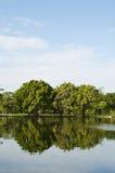 湖在春天公园 免版税库存照片