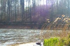 湖在有慢慢地滚动的草的森林里 库存照片