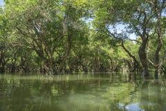 湖在柬埔寨 免版税库存图片