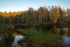 湖在森林秋天 日落 反映 免版税图库摄影