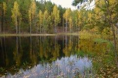 湖在森林里在秋天与下落的叶子 图库摄影