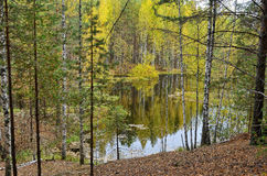 湖在森林里在秋天与下落的叶子 库存图片