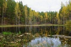 湖在森林里在秋天与下落的叶子 免版税库存图片