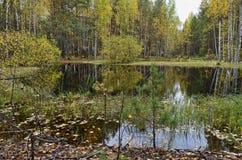 湖在森林里在秋天与下落的叶子 免版税图库摄影