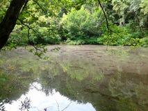 湖在森林里,夏天自然 图库摄影
