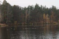 湖在森林里,晚秋天 库存照片