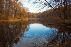 湖在森林里 免版税图库摄影