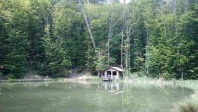 湖在森林里 免版税库存图片