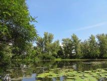 湖在森林里 库存照片