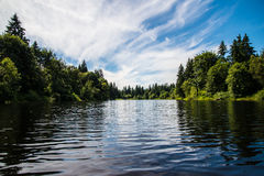 湖在森林 免版税库存照片