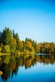 湖在森林 库存照片